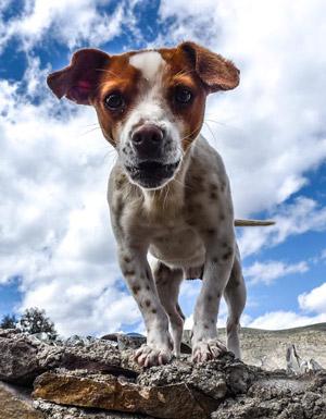 Pleasanton Dog Bite Attorney